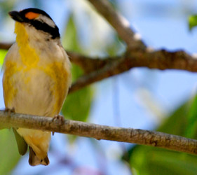 Villa Marine Facilities - Birdwatching and Nature