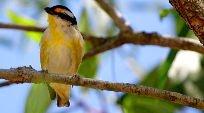 Birdwatching Cairns Accommodation Villa Marine