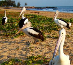 Villa Marine Facilities - Birdwatching and Nature