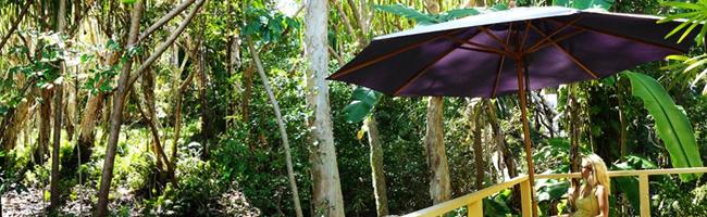 Cairns nature
