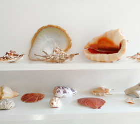 Villa Marine Cairns shell collection
