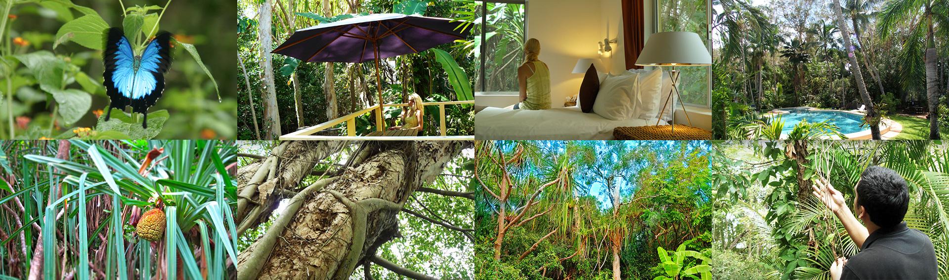 Villa Marine Cairns rainforest apartment collage