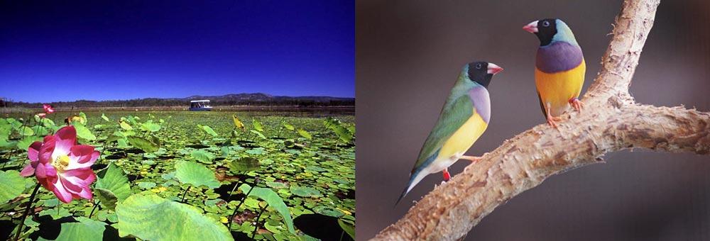Mareeba Wetlands birds Villa Marine